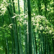 8 Amazing Bamboo Facts
